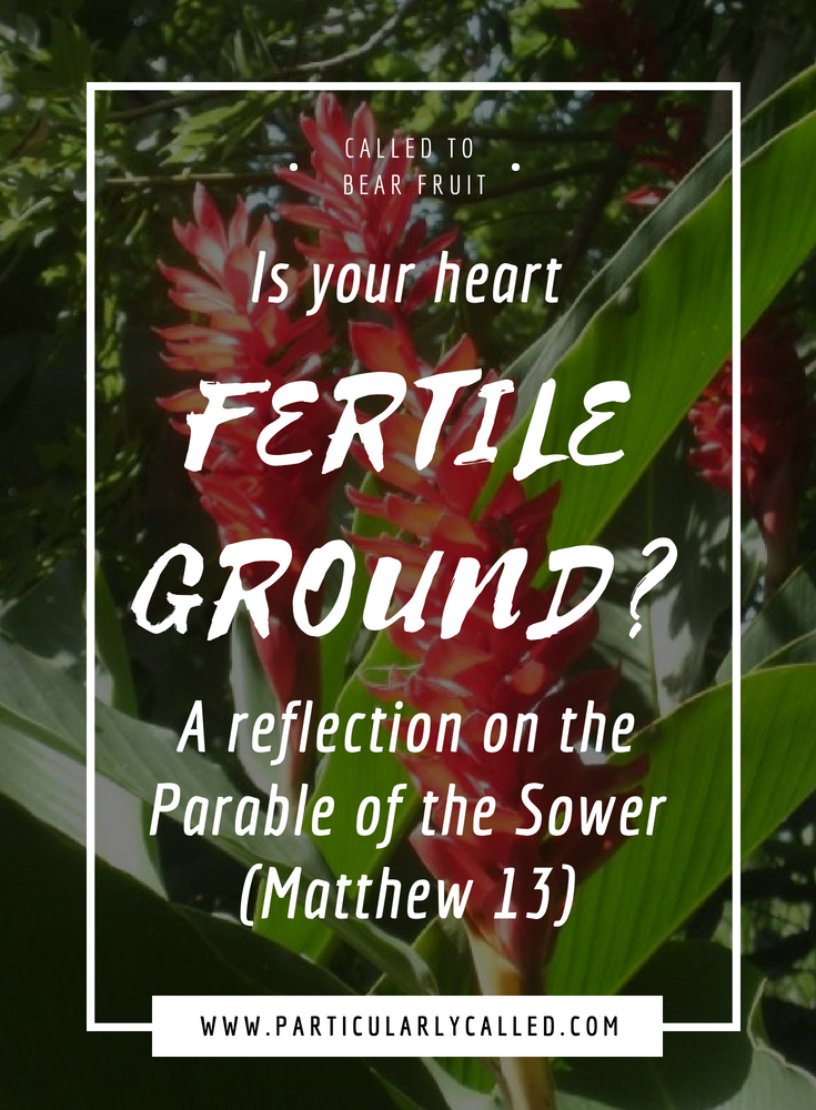 Is your Heart Fertile Ground? Reflection on the Parable of